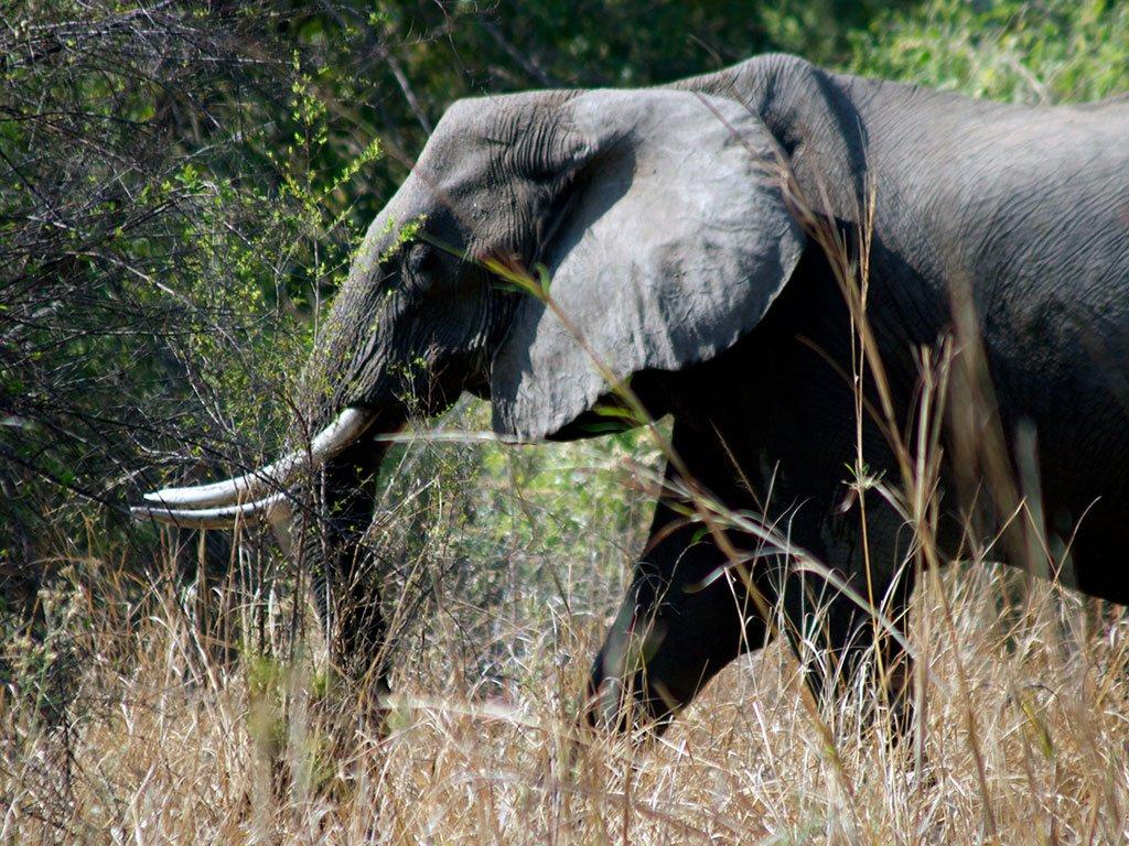 Elephant09